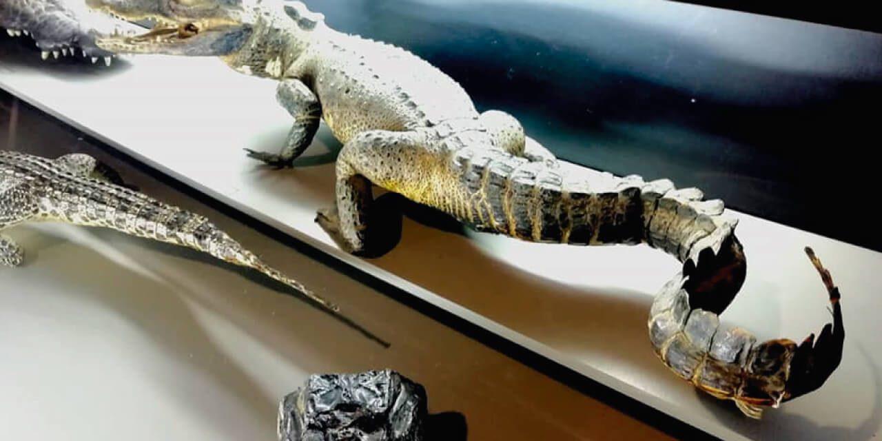 Reptiles autóctonos Museo de la Biodiversidad